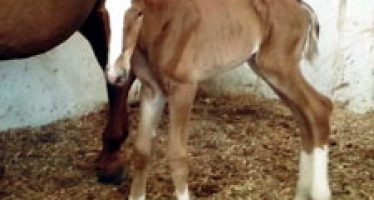 Primeros nacimientos en Yeguada Maeza