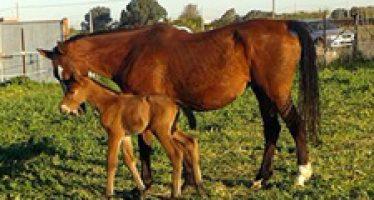 Primer nacimiento de 2016 en Yeguada Valdespino