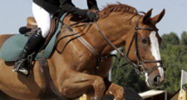 """""""Casiopeia"""", segunda en el pequeño Gran Premio del Polo"""