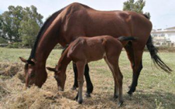 Nacimiento en Yeguada Valdespino