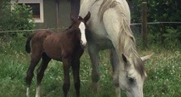 Primer nacimiento de 2017 en Yeguada Agroartime