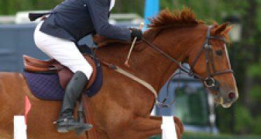 Primera jornada del CSN de caballos Jóvenes de la RSHECC de Madrid