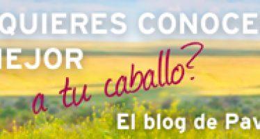 """PAVO lanza el blog """"Todo sobre el caballo"""""""