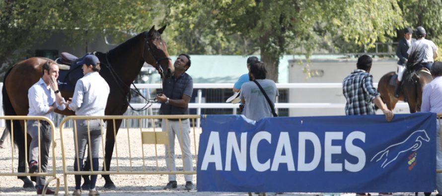 Calendario de pruebas de caballos jóvenes